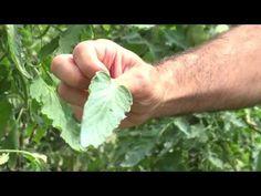 Metode și produse biologice de stimulare și producție a plantelor - YouTube Make It Yourself, Gardening, Youtube, Plant, Biology, Garten, Lawn And Garden, Youtubers, Yard Landscaping