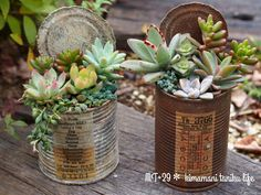 Leave the lid on - Love this idea! Succulents In Containers, Cacti And Succulents, Planting Succulents, Planting Flowers, Little Gardens, Small Gardens, Indoor Garden, Indoor Plants, Deco Floral