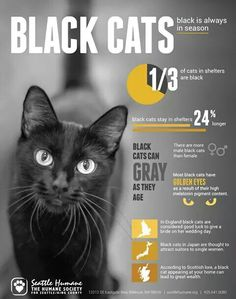 Black kitties It is sad that people black is a symbol of evil. It is not. Mystery brings questions to want we want to know. Fear of a black cat is not worth it. They are just cats. Open your heart and save a life or more. They have a heart of gold. My thoughts. Avril