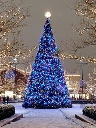 blue tree lights