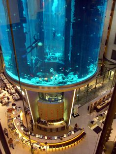 would love to go scuba diving here, in the middle of a bar