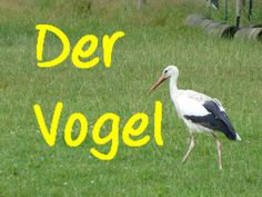 Learn German: der Vogel