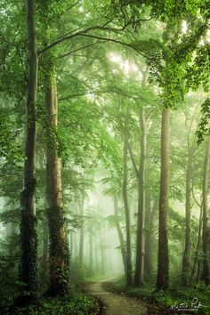 ***Grüner wird's nicht // It does not get greener (Netherlands) by Martin Podt