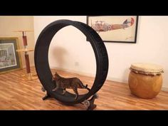 DIY cat exercise wheel - provide you with two easy DIY methods to build an exercise wheel at home. How to make a DIY cat exercise wheel. Cat Gifts, Cat Lover Gifts, Cat Lovers, Crazy Cat Lady, Crazy Cats, Cat Exercise Wheel, Hamster Wheel, Fancy Cats, Cat Room