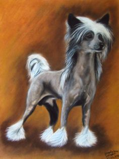 Chinese crested dog, soft pastels on velour