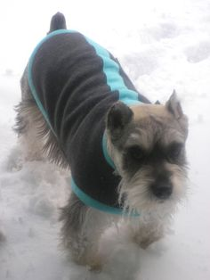 Jack from Anchorage USA modelling his NZ Rovercozy Merino Possum do coat Dog Coats, Usa, Dogs, Model, Animals, Coats For Dogs, Animaux, Doggies, Animales