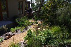 Understorey Garden Design