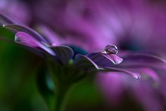 Crystal ball by Silvia Spedicato on 500px