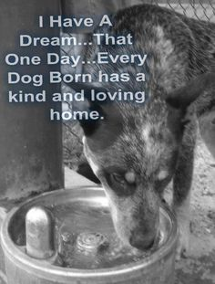 I have a Dream. Every Dog, Cat, All Animals Born Has a Kind and Loving Home. I Love Dogs, Puppy Love, Pet Sitter, Stop Animal Cruelty, Ewok, Dog Rules, Animal Quotes, Save Animals Quotes, Dogs And Puppies