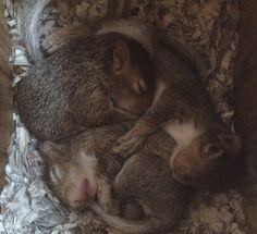 Orava koputti ikkunaan joka päivä – 8 vuotta myöhemmin perhe tajuaa, mitä se yritti näyttää heille