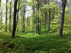 I Love the danish forest!!