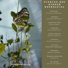 As borboletas são parte integrante do ecossistema. Sua principal função na natureza é a polinizaçào das flores e, conseqüentemente, a produção de frutos e sementes. As populações de borboletas tamb…