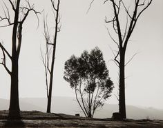 Robert Adams   Edge of San Timeteo Canyon, Redlands, California,1982