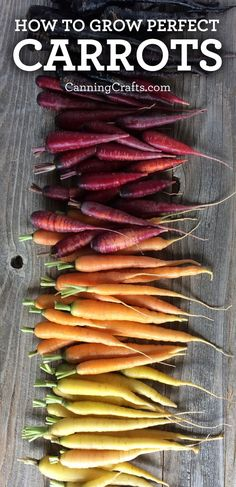 Planting Carrots in Containers with Homemade Potting Soil Recipe Carrots will grow long & straight w Planting Carrots Seeds, How To Plant Carrots, Growing Carrots, Organic Fertilizer, Organic Gardening, Gardening Tips, Vegetable Gardening, Fast Growing Plants, Growing Vegetables
