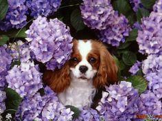 Breed beautiful dogs