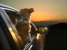 Dogs in Cars by Lara Jo Reagan.