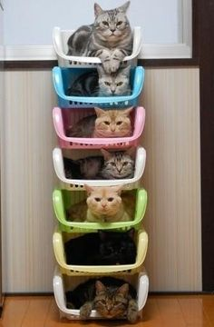 most logical way to store cats. remember this when you're 70 and alone
