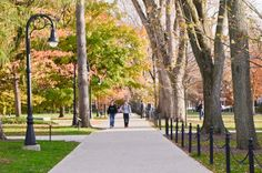 PENN STATE – CAMPUS – Friends walking up the elm-lined mall