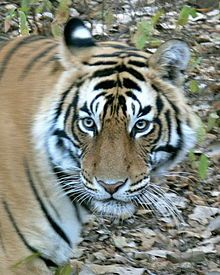 Ranthambore National Park, Rajastan  I want to go to a park with Tigers!!!