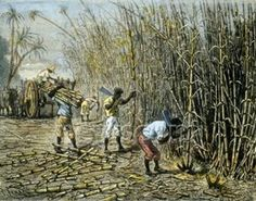 Did you know that: for 105 years (1697-1802) Haiti was responsible for 40% of the sugar consumed in the entire world; 123 millions pounds in 1788 alone.
