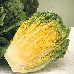 Lettuce 'Winter Gem' (Cos) - Salad Seeds - Thompson & Morgan