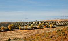 Terras recém-plantadas. Malijai, no departamento dos Alpes-da-Alta-Provença, região administrativa da Provença-Alpes-Costa Azul, França. Fotografia: Charlotte Segurel no Flickr.