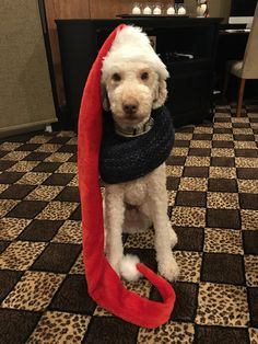 Ready for winter! http://ift.tt/2ACmoe5 cute puppies cats animals