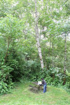 Redwood National Park: Redwood Creek Trailhead Picnic Area