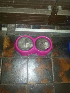Bed and breakfast, kitten style