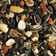 Windy City Parrot helps you find the right nutrition for your specific species. It's a complex matrix of seeds pellets and supplements. Wild Bird Food, Wild Birds, Tropical Birds, Exotic Birds, Big And Small, Pet Birds, Parrot, Seeds, Stuffed Mushrooms