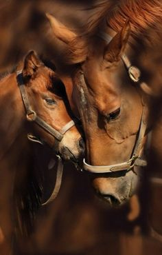 Filly and Mare, beautiful love.