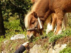 Un poney qui sent une main tendue