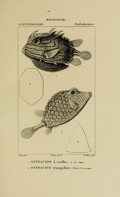 A Flickr account filled with scientific illustration.