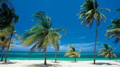 De palmbomen, witte stranden en de blauwe zee van het Caribisch gebied. wie denkt daar niet aan na een dag hard werken!
