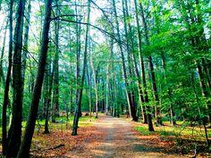 Hiking in Northampton, MA