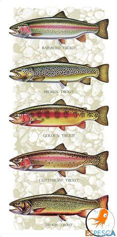 Infografías de peces 38