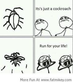It's Just A Cockroach!