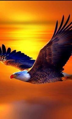 """""""The bold Eagle fly high. Bike Wallpaper, Movies Wallpaper, Cats Wallpaper, Eagle Wallpaper, Wallpaper Space, Animal Wallpaper, Eagle Images, Eagle Pictures, Beautiful Birds"""