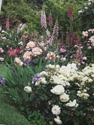 planting with roses - Google Search