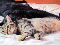 #Tom #Cat #1Year #Freya #Dog #6Month #Nap #IWantToSleep #MyMonsters #Babys #Puppys #LoveAnimal #MyPet #Pets #CanaryIsland