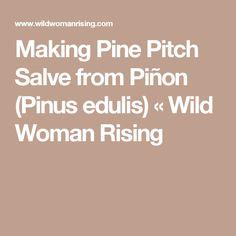 Making Pine Pitch Salve from Piñon (Pinus edulis) « Wild Woman Rising
