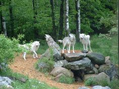 Your not welcome in our fort! Wolves only!