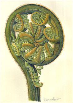 Botanical Illustration History