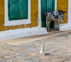 The donkey and the cat.