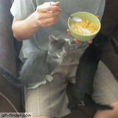 Kitten wants cereal | Gif Finder – Find and Share funny animated gifs