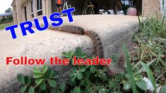 Trusting the Leader in Nature