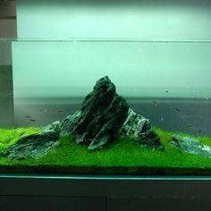 Nature Aquariums and Aquascaping Ideas by Takashi Amano.