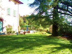 Large fir tree in the garden of the historic villa in Lucca Antonia. Tuscany Property for sale. www.lucaevillas.it