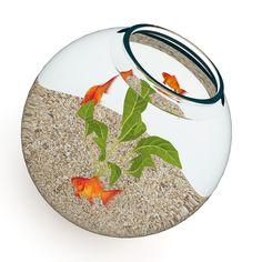 Sphere, carpet aquarium plants http://aquariumwaterplants.com