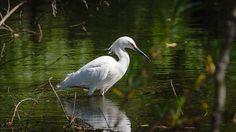 Madrona Marsh Preserve - Torrance, CA - Kid friendly activity reviews - Trekaroo